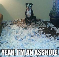 #dog shaming this is Kilo @Angel Kittiyachavalit LaCorti @Teresa Renaud Reynolds Cox