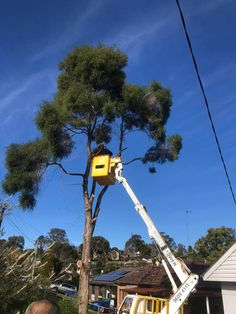 Our team of experienced Sydney tree removal service providers possess the experience and have been equipped with the most advanced tree removal machinery and equipment to enable them to deliver your Sydney tree removal service in the best manner possible. If you are aware that some trees have become a nuisance or now pose as a hazard be sure to contact our qualified team of tree removal service providers here at Sydney Tree and Garden. Tree Removal Service, Removal Services, Garden Trees, Sydney, How To Become, Poses, Building, Buildings, Architectural Engineering