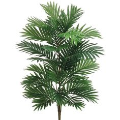 "Areca Palm Bush in Green36"" Tall ($18) ❤ liked on Polyvore featuring home, home decor, floral decor, fake palm trees, artificial areca palm tree, tropical palms, areca palm plant and tropical home decor"