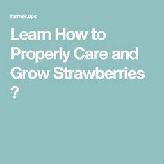 Learn How to Properly Care and Grow Strawberries ⋆
