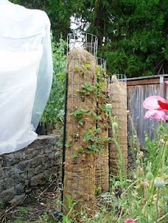 Strawberry towers with fencing and coconut mats