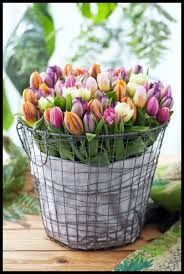 Tulips always tell me it's SPRING! I have a chicken wire basket we can line it with burlap.or gingham.and fill it with either baby's breath or colorful tulips. Pretty Flowers, Fresh Flowers, Spring Flowers, Tulips Flowers, Draw Flowers, Spring Bouquet, Spring Blooms, Easter Flowers, Spring Plants