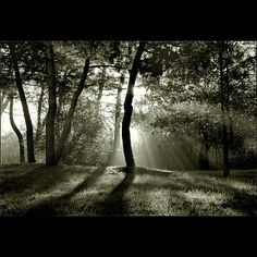 by Ivano Bettati. Love the light entereing the woods Chiaroscuro Photography, Nature Photography, Cloudy Day, Photomontage, Dark Colors, Pretty Pictures, Light In The Dark, Beautiful Places, Concept