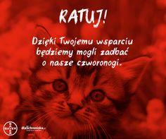 Akcje na platformie dlaschroniska.pl, w których w 2016 roku uczestniczy Fundacja Felineus.   Platforma dlaSchroniska.pl powstała, by ułatwić Internautom wspieranie najbardziej potrzebujących schroniska dla zwierząt w Polsce – każdy, kto chce pomóc bezdomnym psom i kotom, może w szybki i prosty sposób zakupić dla nich niezbędne produkty.