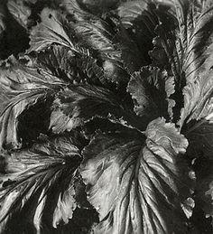 Corpron, Carlotta M.:  8 Leaves, ca 1935.