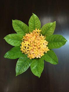 Florals Easy Rangoli Designs Diwali, Rangoli Designs Flower, Rangoli Ideas, Colorful Rangoli Designs, Rangoli Designs Images, Flower Rangoli, Diwali Decorations At Home, Festival Decorations, House Plants Decor