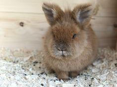My fluffy Rabbit