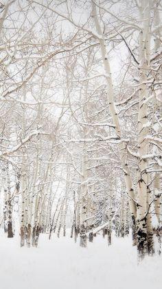 Birch-Trees-Winter-Landscape-iPhone-6-Plus-HD-Wallpaper.