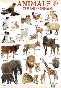love animals