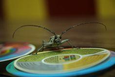 I'm bugs