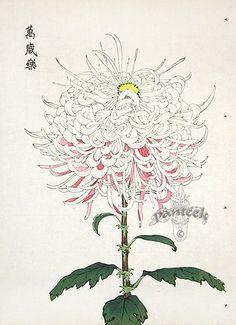 Keika Hasegawa Chrysanthemum Wood Block Prints