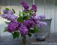 Do you have an old favorite Lilac bush you want to propagate? Rooting lilacs from cuttings is easier than you think, come see how! Lilac Tree, Lilac Flowers, Cut Flowers, Purple Roses, Lilac Bouquet, Beautiful Flowers, Plant Cuttings, Propagation, Container Gardening