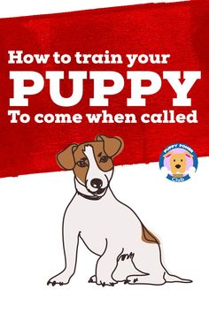Here's how to get your puppy to come when you called. Check out these puppy training tips to get your puppy to listen when called. #PuppyPowerClub #puppytraining #puppies