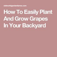 How To Easily Plant And Grow Grapes In Your Backyard