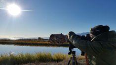 Ebro Delta Birds