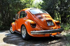 my orange bettle
