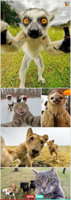10+ Of The Most Funny Animal Selfies That Will Make You Laugh #funnypics #animalselfie #funnyselfie #bemethis #funnypictures