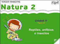 Reptiles, anfibios o insectos