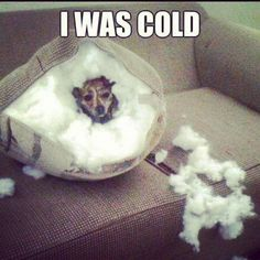 So I made an igloo  #puppy  #cold  #funny  #dogmeme  www.anilols.co.uk for more funny animals #cats