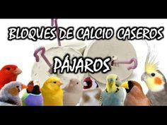 COMO HACER BARRITAS DE MIEL CASERAS PARA CANARIOS Y EXOTICOS - YouTube
