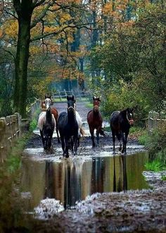 horses in pond Most Beautiful Horses, All The Pretty Horses, Horse Photos, Horse Pictures, Beautiful Creatures, Animals Beautiful, Animals And Pets, Cute Animals, Majestic Horse