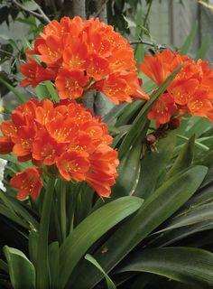 12 plantas de sombra que te enamorarán Beautiful Flowers Garden, Exotic Flowers, Orange Flowers, Amazing Flowers, Beautiful Roses, Garden Art, Garden Plants, Low Light Plants, Indoor Flowers