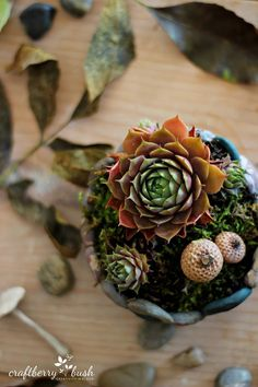 On your next nature walk, save acorns and bits of moss to surround succulents in this faux stone planter. A clever idea from Lucy at Craftberry Bush blog. || @craftberrybush
