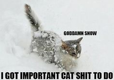Important cat shit