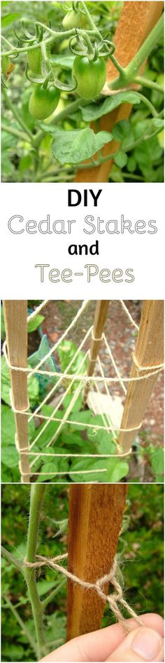 DIY Cedar Garden Stakes and Tee-pees - Learn how to use cedar fence pickets to make your own sturdy cheap garden stakes with this tutorial.