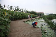 Shanghai Houtan Park wins World's Best Landscape - Architecture Linked - Architect & Architectural Social Network