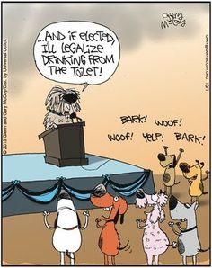 The flying McCoy's For October 2015 Dog Jokes, Funny Dog Memes, Funny Cartoons, Funny Dogs, Funny Animals, Dog Humor, Dog Funnies, Animal Funnies, Animal Humour
