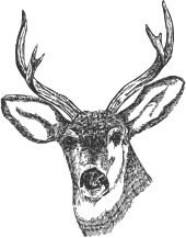 Deer Head by @ryanlerch, A line art drawing of a Deers head by Tom Kelley for the US Fish and Wildlife Service. Source URL:http://www.fws.gov/pictures/lineart/tomkelley/deerhead.html, on @openclipart