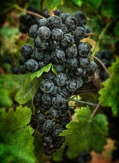 The beginning of fine wine