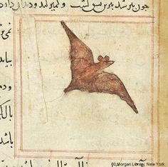 Bestiary, Flying bat.The Morgan Library & Museum