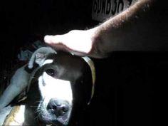 Ace - injured dog rescued last night by Eldad Hagar - Please comment, ra...