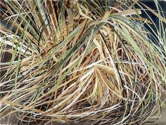 the grasses - KAREN JACOBS  contemporary and abstract paintings