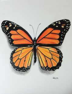 Colored pencil Monarch butterfly  by Laurie Rejc