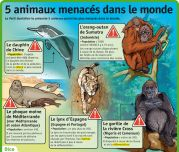 5 animaux menacés dans le monde - Le Petit Quotidien, le seul site d'information quotidienne pour les enfants de 6 - 10 ans ! Extinct And Endangered Animals, French Worksheets, Teaching French, Science, Information, Baseball Cards, Education, Recycling, Culture