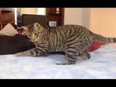 Cats Try To Figure Out Waterbeds And I'm Laughing My Paws Off | The Animal Rescue Site Blog