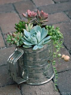 Succulents in a flour sifter - keep an eye out for fun containers at tag sales!