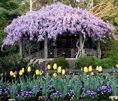pergola covered with wisteria. I have the wisteria.I just need the pergola! Patio Garden, Plants, Gorgeous Gardens, Backyard Pergola, Covered Pergola, Outdoor Gardens, Beautiful Gardens, Backyard, Wisteria