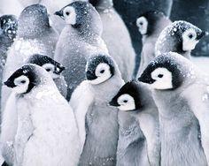 Live Penguin Web Cams...the kiddos love it!