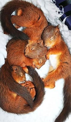 128 Adorable Pics To Celebrate Squirrel Appreciation Day - Tiere - hund Cute Creatures, Beautiful Creatures, Animals Beautiful, Cute Squirrel, Baby Squirrel, Squirrels, Cute Baby Animals, Animals And Pets, Funny Animals