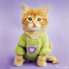 Double cat card - Jimmy - Rachael Hale