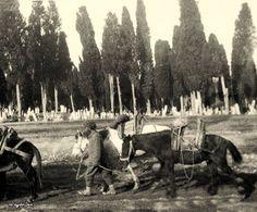 İstanbul, Karacaahmet Mezarlığı