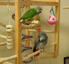 custom built hanging play gym for rescued parrots