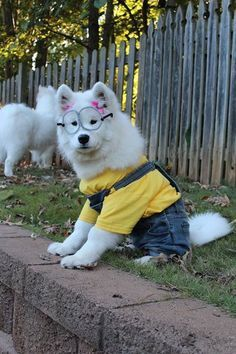 samoyed costume - Google Search