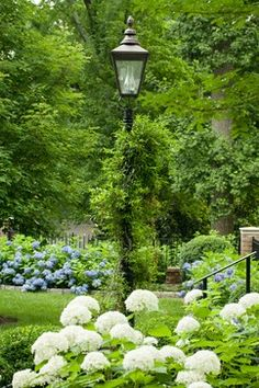 Lamp post..... gorgeous setting too with gorgeous white hydrangeas!!!! loooove!!!!!
