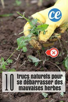 10 trucs naturels pour se débarrasser des mauvaises herbes