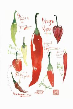 Piments by Lucile Prache Textual Art on Wrapped Canvas